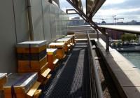 ruches sur le toit